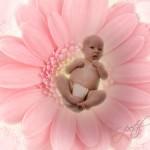 Petal Baby copy